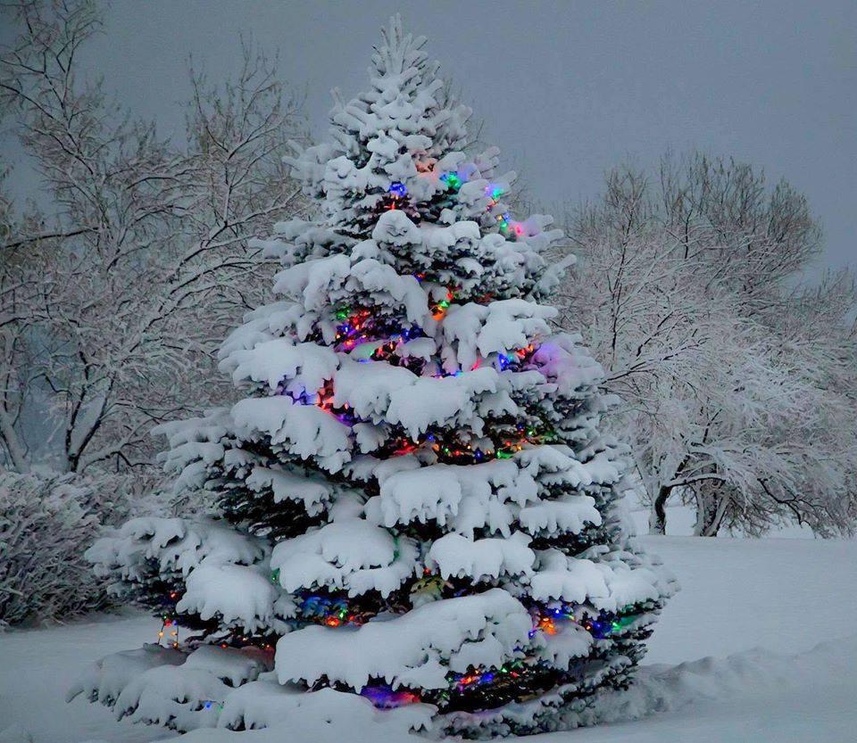 Z okazji nadchodzących Świąt dużo spokoju, radości i chwili wytchnienia życzy Dyrektor Ośrodka wraz z pracownikami.